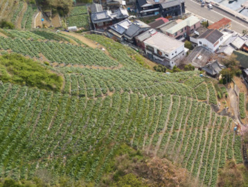 四国愛媛県宇和島の段々畑