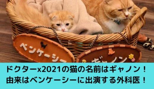 ドクターxに出演している猫ギャノン